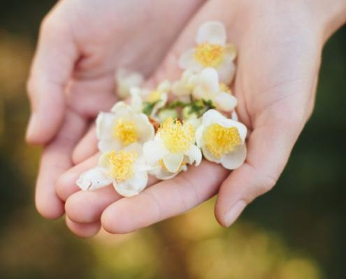 Hand With Tea Flower